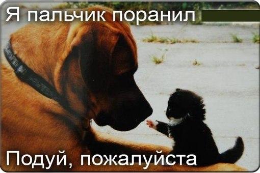 классные картинки про дружбу: