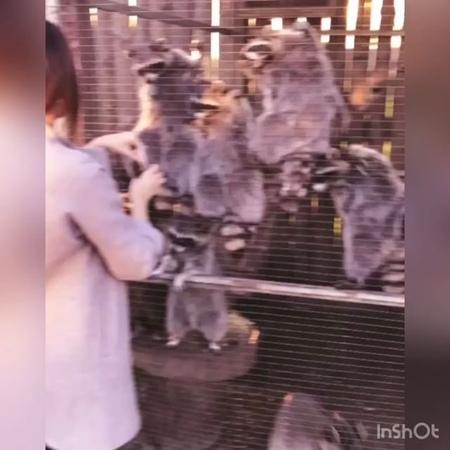 Alsu_lit video