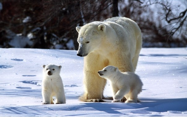 Занимательные истории о животных ,фото... - Страница 13 GvAlEnld1Rc