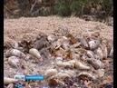 Эксперт Свалки тухлой рыбы под Калининградом опасны для окружающей среды