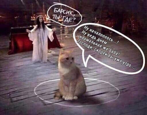 Серега, Барсик и Она Жил-был молодой человек по имени Сергей. И был у него кот Барсик. Тооолстый такой. И добротный, с блестящей шерстью и наглой мордой. Эта наглая морда часто будила своего