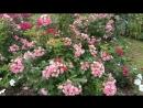 г Екатеринбург 2018 год Ботанический сад п Розы для тебя исп И Янакий