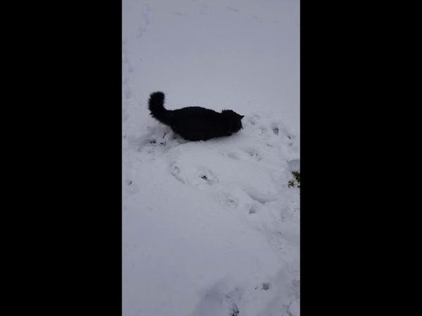 Кот играет с мышкой в Жар-птице в Белокурихе.