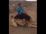 When you are a bit too heavy even for camels