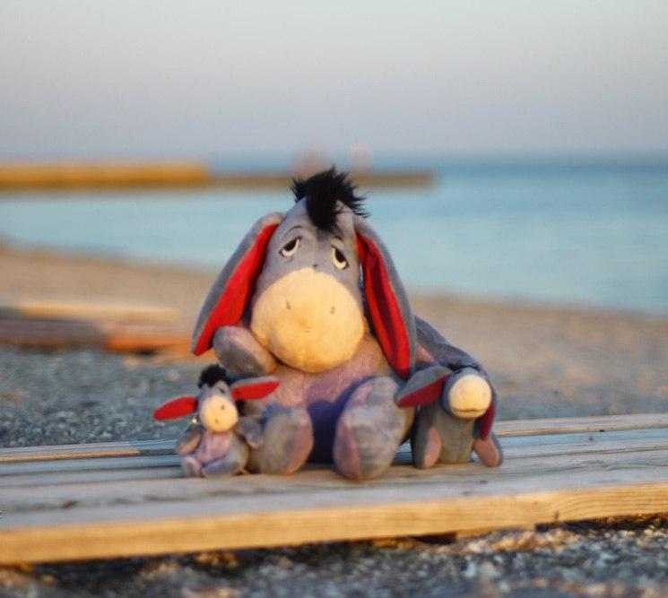 Ослик ждет на море