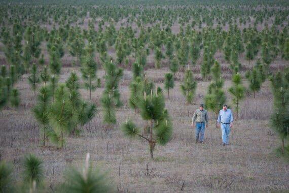 Человек высадил 8 млн деревьев MC Дэвис, бывший карточный игрок и бизнесмен вложил 90 млн $, чтобы открыть самый крупный частный заповедник в США. За последние 20 лет он высадил 8 млн саженцев и