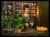Ботаника. Композиция из мандаринов(1)