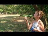Пробуем яблоки Белый Налив 25.08.2015