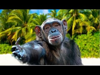 Открытка обезьяна яна поздравление