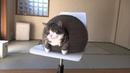 ПОПРОБУЙ НЕ ЗАСМЕЯТЬСЯ - Смешные Приколы с Животными до слез, смешные коты, funny cats 117