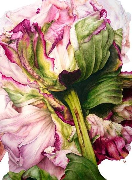 """Серия картин """"Botanic Art"""" от художника Marie Burke"""