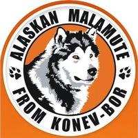 Логотип Аляскинские маламуты из Конев-Бора