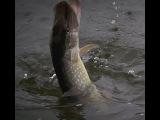 Рыбалка весной на Ахтубе спиннингом
