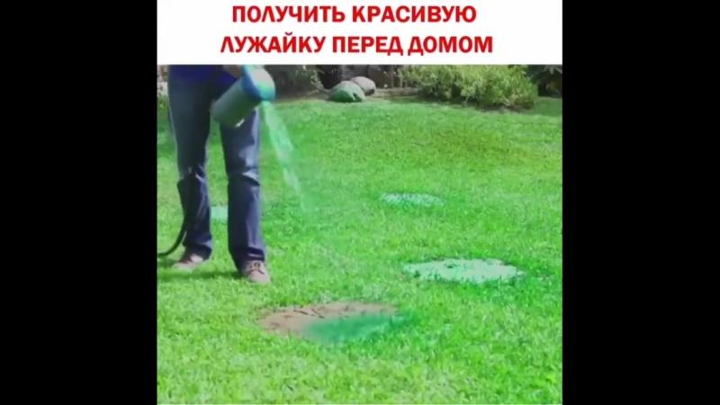 Быстро вырастить газон