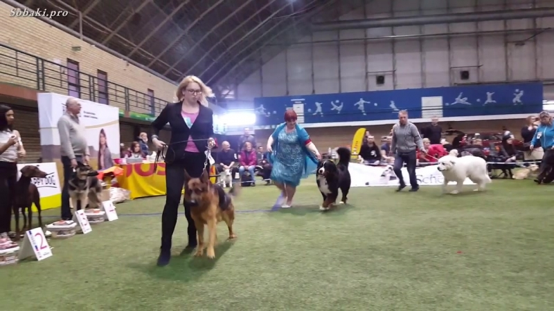 BEST IN SHOW - 1 группа пород (большие собаки). Чемпионат Германии. Выставка «Пл