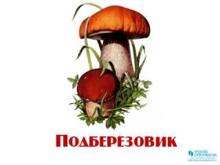 Картинки грибов для детей нарисованные цветные - dbdd