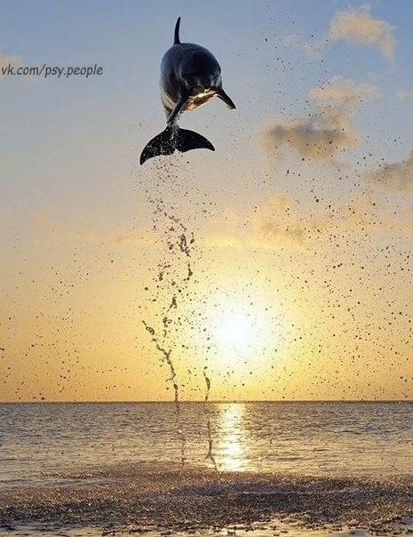 Ого! Как высоко прыгает!