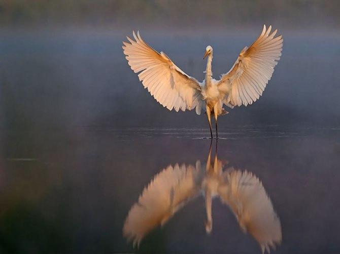Bohdan.org.ua: Кращі фотографії National Geographic грудня 2013 року