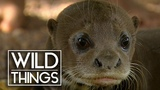 Mission Giant Otter Otter Sanctuary Documentary Wild Things