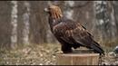 Ловцы высокого полёта: RT побывал в Центре соколиной охоты