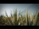 Питьевой гель Aloe Vera Sivera от LR