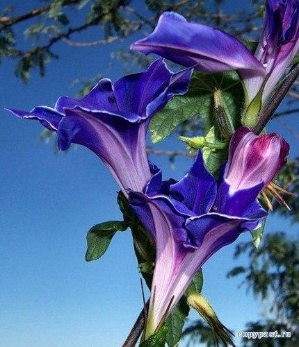 Синее небо, синее море, синяя птица,синий цветочек и синий платочек