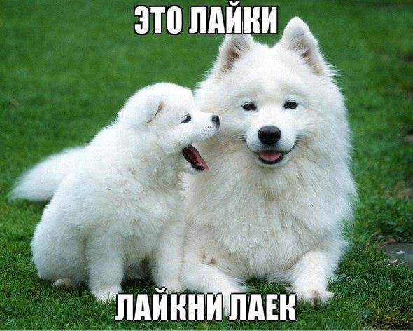фото милые собачки