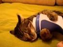 Кот и массажер нашли друг-друга) rjn b vfccfth yfikb lheu-lheuf)