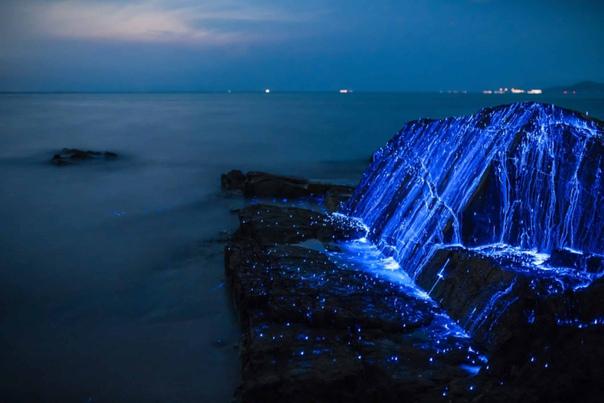 Одно из самых восхитительных зрелищ, которое можно увидеть ночью на берегу моря  свечение биолюминесцентных креветок
