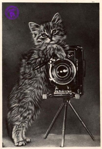 Поздравительные открытки для фотографов