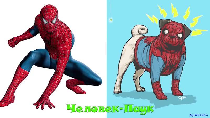 Если бы супергерои Marvel были собаками