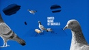 United Music of Brussels teaser