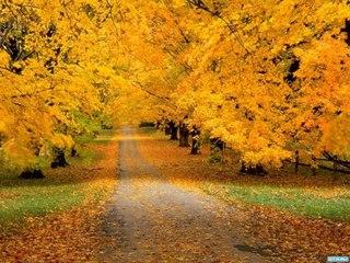 Как меняется природа осенью картинки
