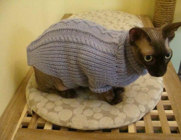 Свитер для кота вязание 486
