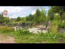 Оперативное видео: кража туй с кладбищ в Смоленске
