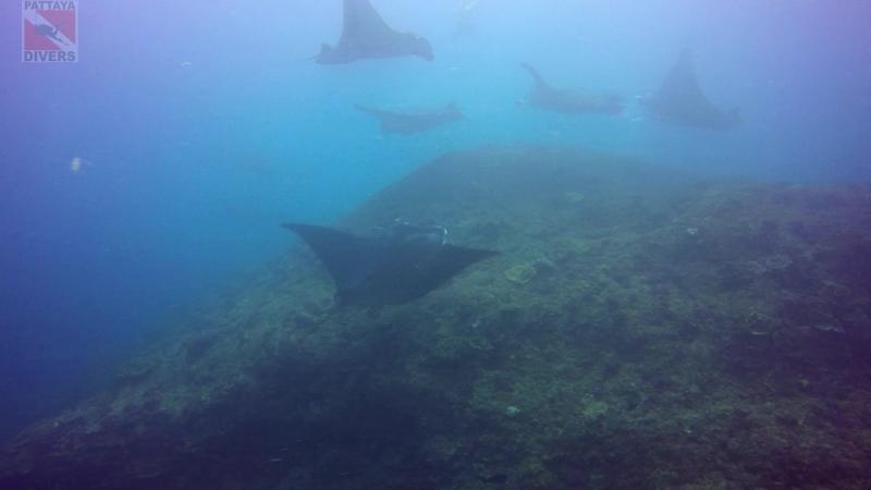 Тринадцать огромных скатов манта на Manta Point | Дайвинг на Бали