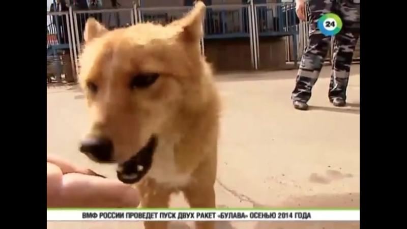 Взрывчатку в Шереметьево ищут собаки шалайки
