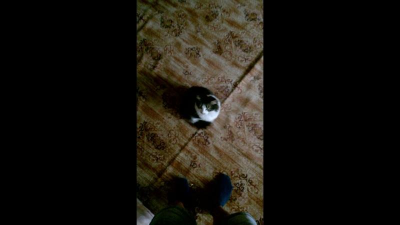 Дрессирую кота пхуеть суета Палит так как будто ща убьет драка UFC MMA LMAO братья запашные на ковре убийство тэги блять сколь
