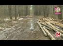 Нефтекамцы пожаловались на незаконную вырубку леса