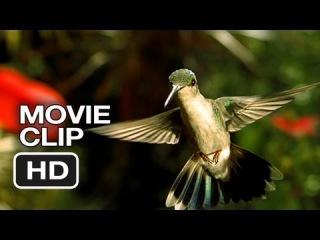 Disneynature: Wings of Life Movie Clip - Hummingbird (2013) - Meryl Streep Movie HD