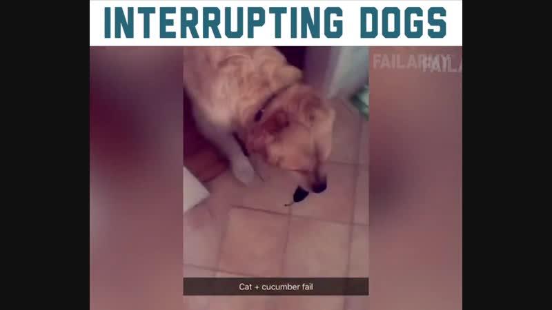 Собакены могут помешать!