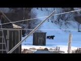 Русская бабушка прогоняет медведей  / Russian babushka kicks out the bears