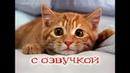 Приколы с котами с ОЗВУЧКОЙ – Смешные коты и кошки 2018 от PSO