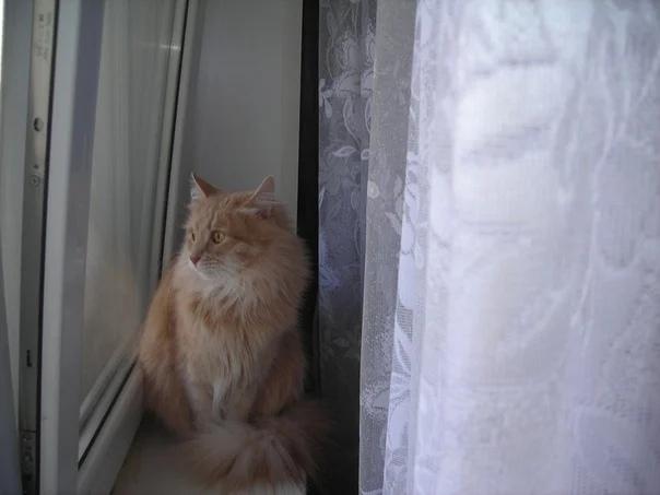 Вот сижу, смотрю в окошко:Где ты, Мурка, моя кошка?С кем гуляешь ты сейчасВ этот день и в этот час?