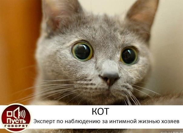 Кот, эксперт по наблюдению за интимной жизнью хозяев