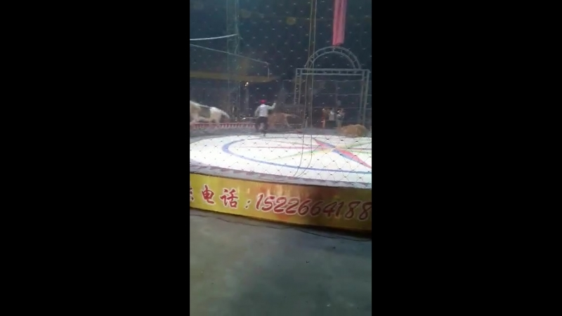Хищники напали на пони в цирке