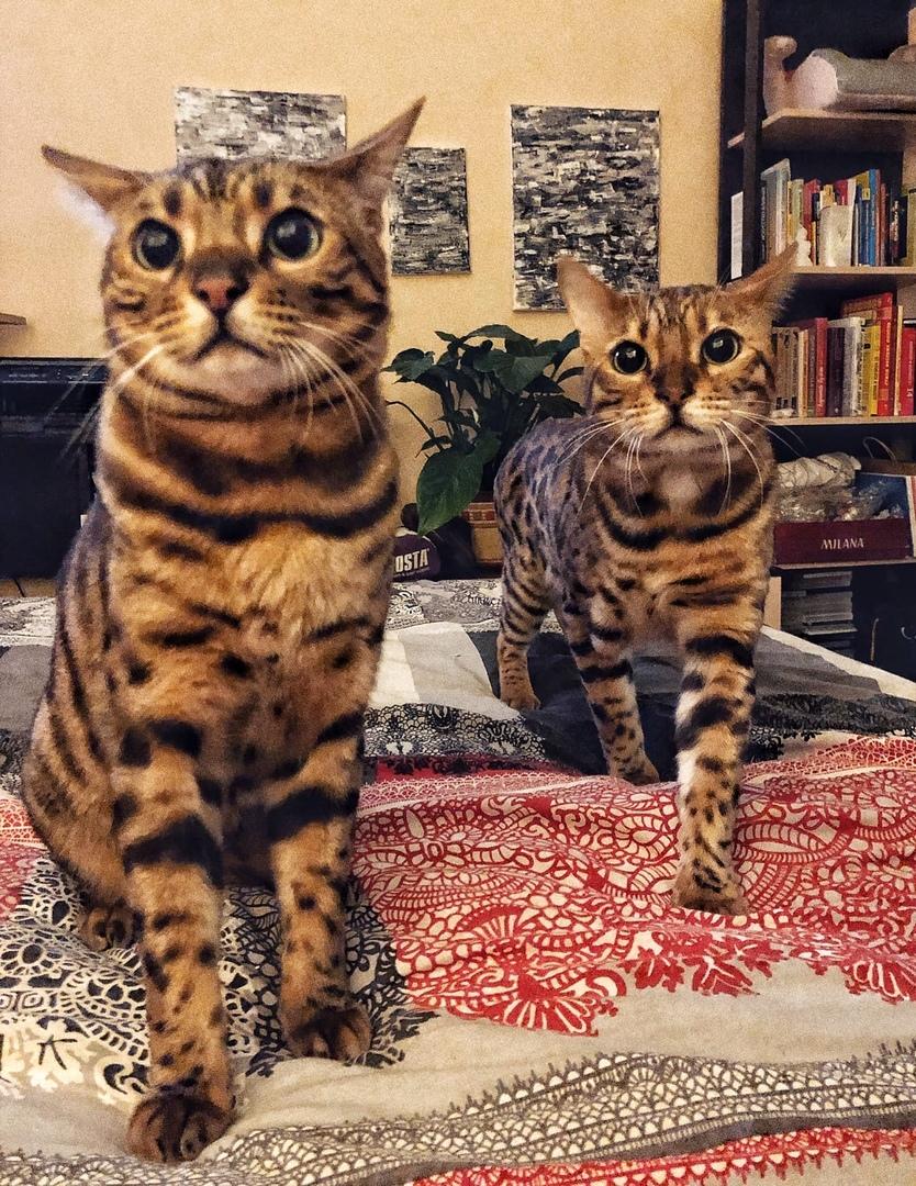 Одна из обязанностей котиков - очень внимательно...