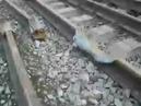 Коварство сна РЖД Попилили рельсы локомотивом