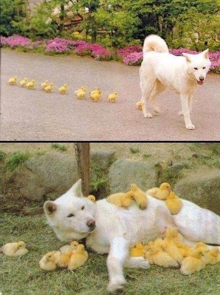 Мамы разные нужны, Мамы всякие важны!
