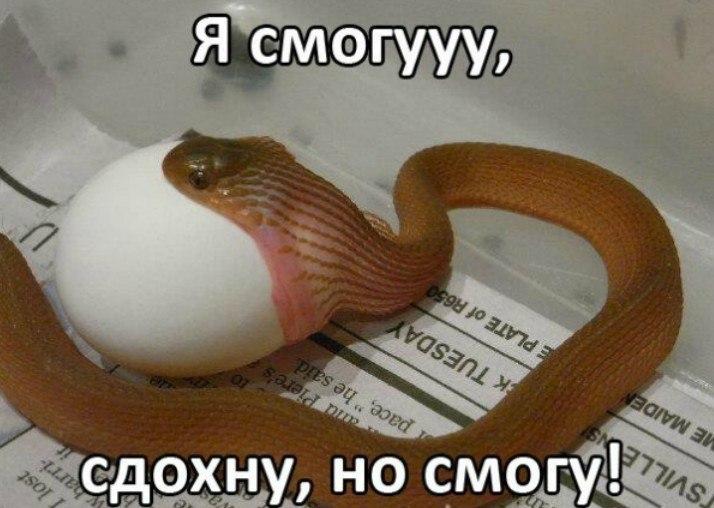 http://cs14102.vk.me/c7006/v7006475/42ddb/bAJYXJ45AUs.jpg